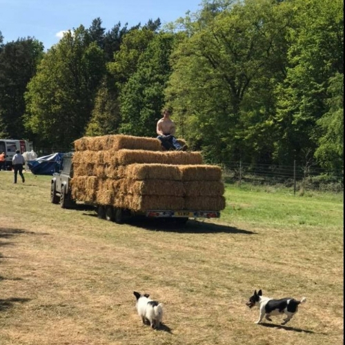 straw bales for dogfest